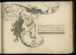 Wing MS ZW 545 .S431, letter T
