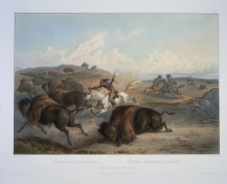 Karl Bodmer. Indians Hunting the Bison.VAULT oversize Ayer Art Bodmer