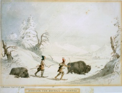 Hunting Buffalo in Winter