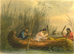 Mary H. Eastman. Gathering Wild Rice.